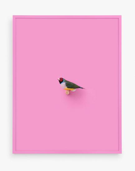 Daniel Handal, Lady Gouldian Finch (Veronese)