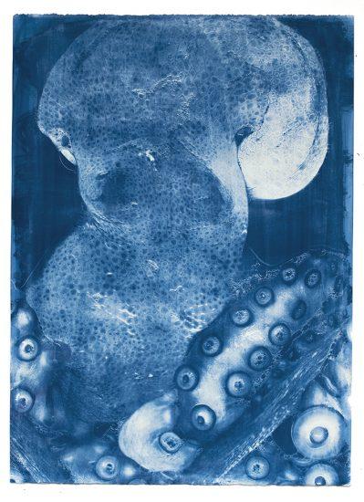 Brian Buckley, Octopus (Bust)