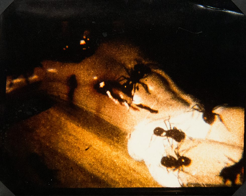 A Fire in My Belly (Film Still) [Ants on Crucifix]