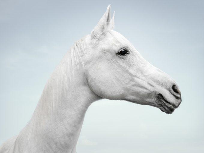 Zack Seckler, Horse Smile #1