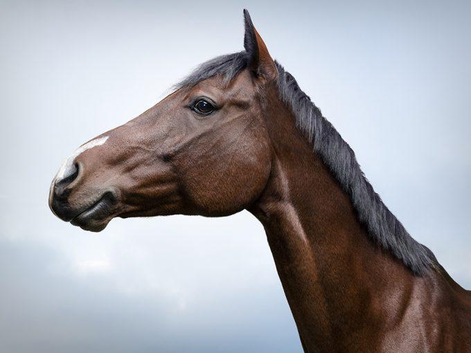 Zack Seckler, Horse Smile #2