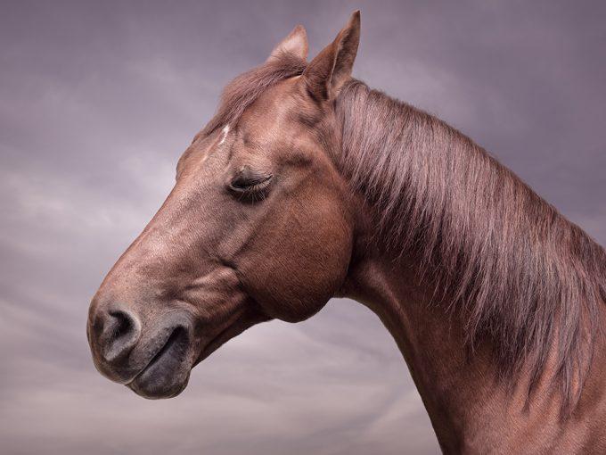 Zack Seckler, Horse Smile #4
