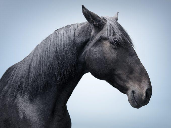 Zack Seckler, Horse Smile #5