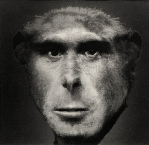 Nancy Burson, Evolution II (Chimpanzee and Man)