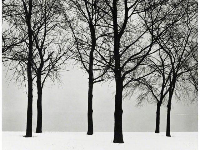 Harry Callahan, Chicago (Trees at Lake Shore)