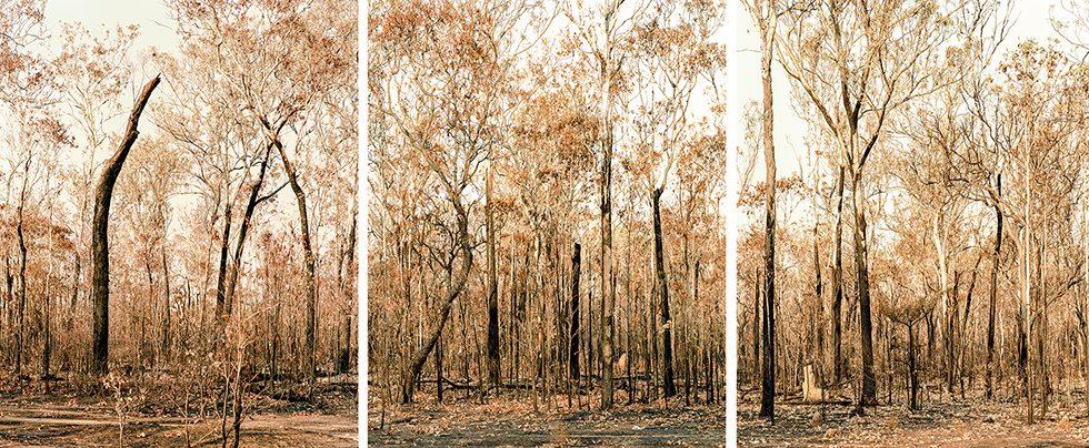 After a Bushfire, Australia, 2008
