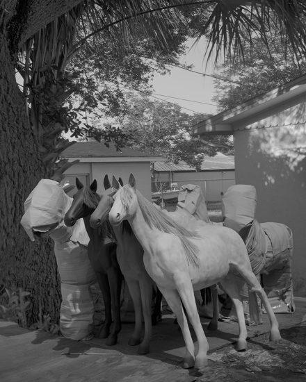 Joshua Lutz, Covered Horses