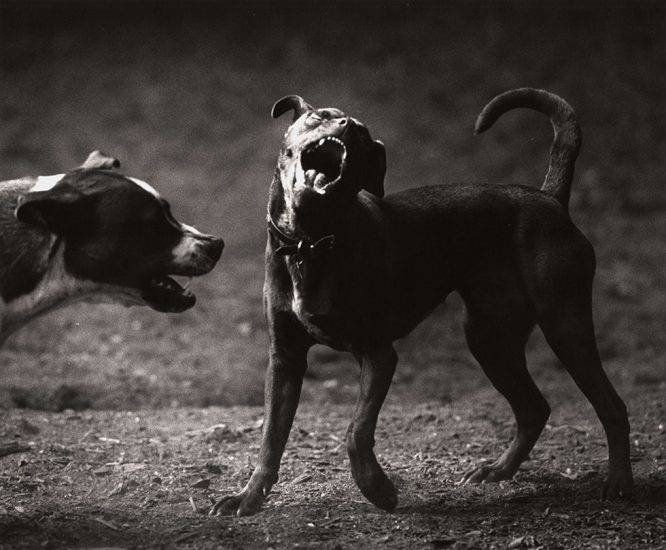 Michael Crouser, Dog Run #60