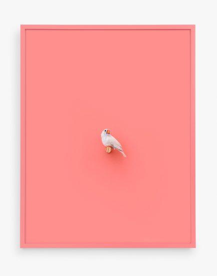 Daniel Handal, White Zebra Finch (Orange Flamingo)