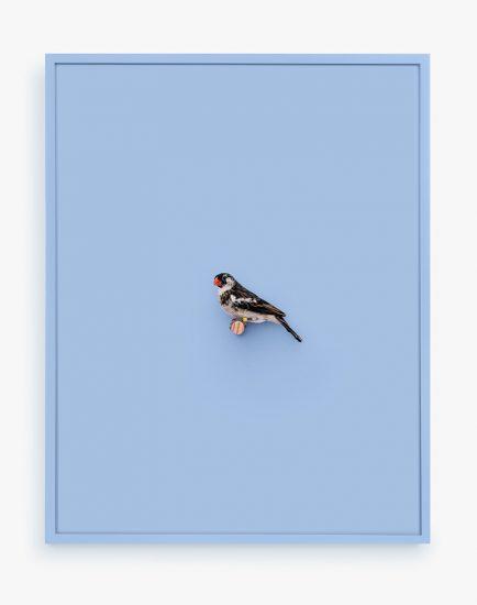 Daniel Handal, Whydah Finch (Seventh Ray)