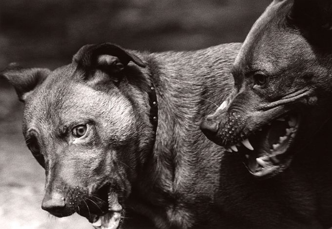 Michael Crouser, Dog Run #103