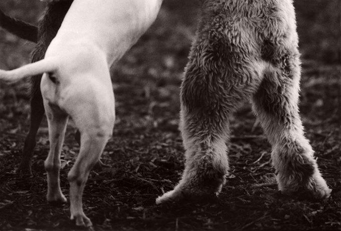 Michael Crouser, Dog Run #37