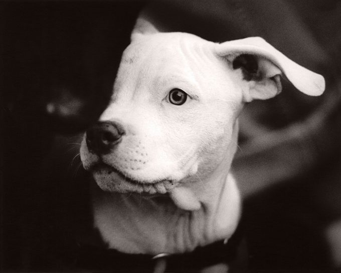 Michael Crouser, Dog Run #58