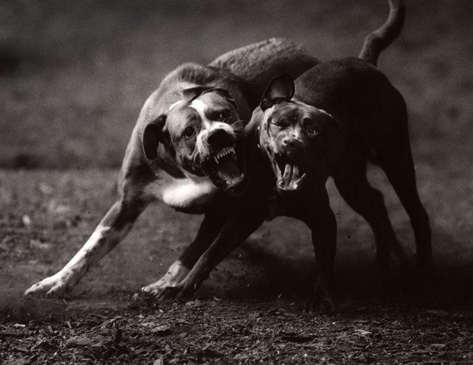 Michael Crouser, Dog Run #61