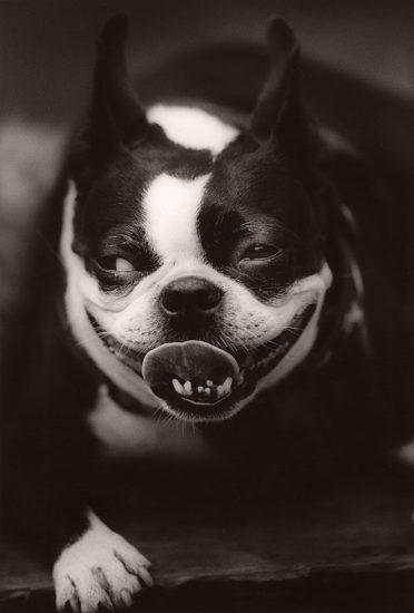 Michael Crouser, Dog Run #7