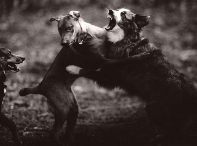 Michael Crouser, Dog Run #8