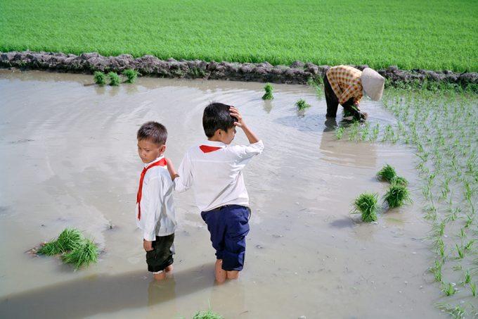 Pipo Nguyen-duy,_Harvest, Vietnam