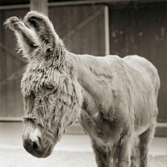 Isa Leshko, Babs, Donkey, Age 24, I